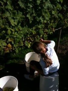Oatley harvest back to work