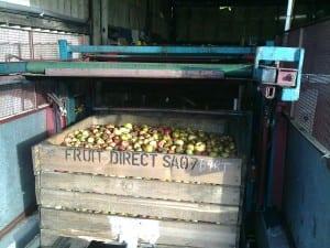 Orchard Pig Cider Apples